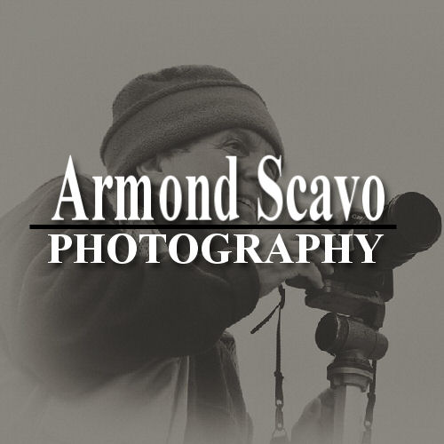 Armond Scavo Photography Website